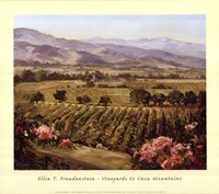 Vineyards to Vaca Mountains Framed Print