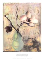 Magnolia Blossoms Fine-Art Print