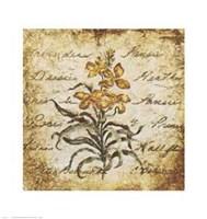 Yellow Petit Botanical Fine-Art Print