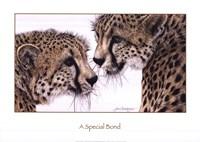 A Special Bond Fine-Art Print