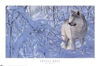 Arctic Wolf Fine-Art Print