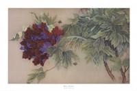 Red Peony Fine-Art Print
