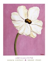 White Cosmos On Pink Fine-Art Print
