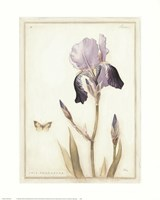 Purple Iris with Beard II Fine-Art Print