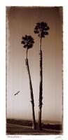 Palmae Palm I Fine-Art Print