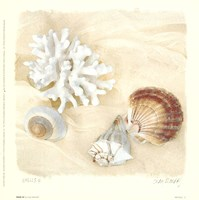 Shells IV Framed Print