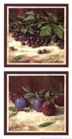 Blackberry Plum Combo Fine-Art Print