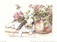 Geraniums Jubilee Fine-Art Print