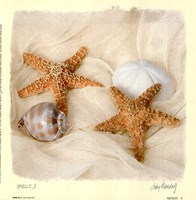 Shells III Framed Print