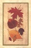 Autumn Harvest II Fine-Art Print