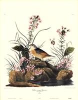 Yellow-Winged Sparrow Fine-Art Print