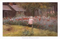 The Poppy Garden Fine-Art Print