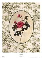 Toile Rose II Fine-Art Print