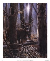 Woodland Sentry Fine-Art Print