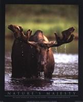 Bull Moose Fine-Art Print