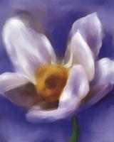 Daffodil Study Fine-Art Print