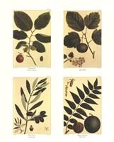 Botanical Four Panel II Fine-Art Print