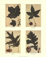 Botanical 4 Panel I Fine-Art Print