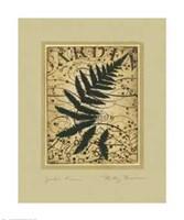 Garden Fern Fine-Art Print