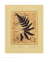 Fern Garden Fine-Art Print