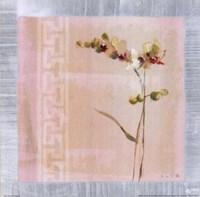 Graceful Orchids II Fine-Art Print