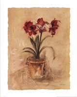 Secret Amaryllis II Fine-Art Print