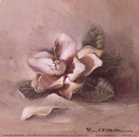 Sunlit Magnolia Fine-Art Print