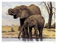 Elephants By The Waterhole Fine-Art Print
