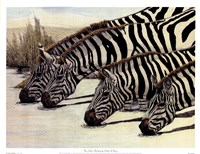 Four Zebras Drinking Fine-Art Print