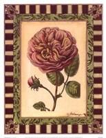 Renaissance Rose II Fine-Art Print