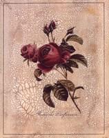 Rose Perfume Fine-Art Print