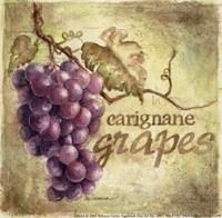 Carignane Fine-Art Print