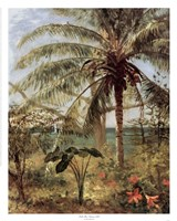 Palm Tree, Nassau 1892 Fine-Art Print