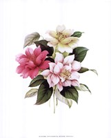 Camellias I Fine-Art Print