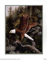 Eagle Perch Fine-Art Print