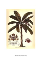 Palm and Crest II Fine-Art Print