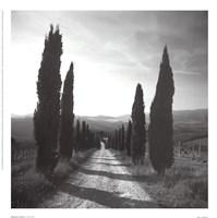 Mensano, Tuscany Fine-Art Print