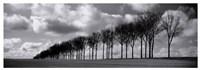 Somme Treeline Fine-Art Print