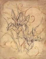 Pencil Sketch Floral III Fine-Art Print