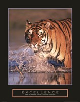 Excellence - Bengal Tiger Fine-Art Print