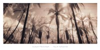 Palm Paradise Fine-Art Print