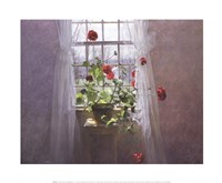 Red Geraniums (Small) Fine-Art Print