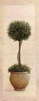 Topiary Ball I Fine-Art Print