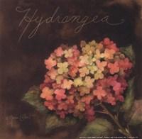Midnight Hydrangea Fine-Art Print