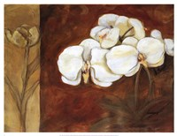 Luisia II Fine-Art Print