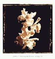 Flower Study II Fine-Art Print