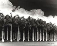 White Palms, Costa Rica Fine-Art Print