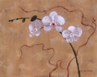 Morning Orchids Fine-Art Print