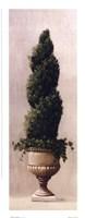 Roman Topiary l Fine-Art Print
