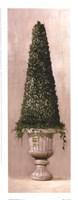 Florentine Topiary ll Fine-Art Print